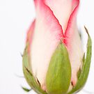 Pink and White by Elizabeth Tunstall