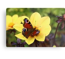 Peacock Butterfly On Dahlia Metal Print