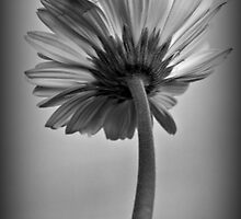 Solitary by Karen Tregoning