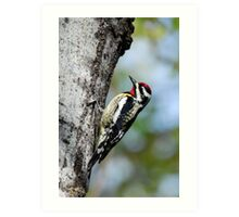 Woodpecker Bird Art Art Print
