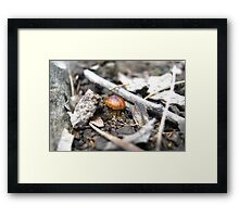 Tiny Brown One Framed Print