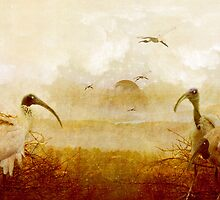 Flight of the Ibis by Margi