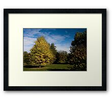 The Bright One Framed Print