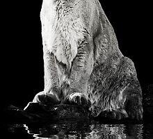 Cougar Reflection by KBritt