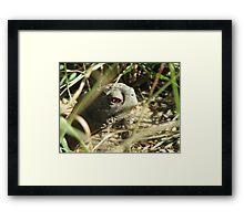 Desert Box Turtle Close-up Framed Print