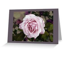 Tuscan Rose Greeting Card