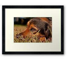 A look Framed Print