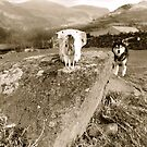 Of Dogs and Sheep... by Graham Povey