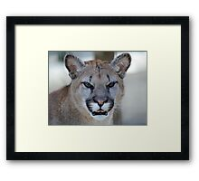 It Wasn't Me! Framed Print