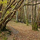 A Riverside Walk in Machynlleth by Simon Hickie