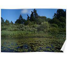 Pond Scene Poster