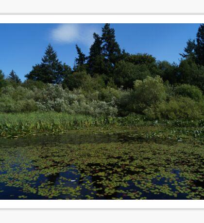 Pond Scene Sticker