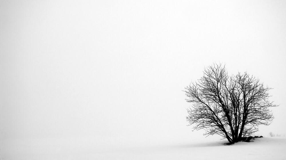 10.3.2012: In the Mist by Petri Volanen