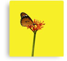 African Monarch on Tropical Flower Canvas Print