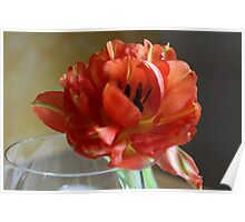 Closeup of Tulip with Glass Poster