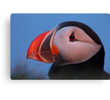Puffin in the midnight sun Canvas Print