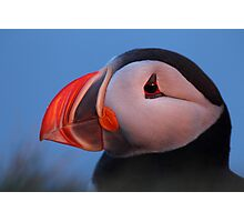 Puffin in the midnight sun Photographic Print