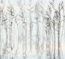 Dreamy reeds by Remo Savisaar