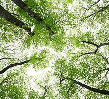 Spring Greenery  by Remo Savisaar