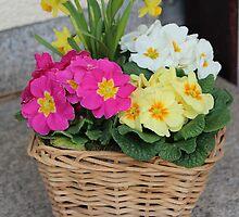 Flower Basket in Spring by karina5