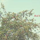 Red Delicious by Hilary Walker