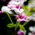 Micro Beauty by TyTheTerrible
