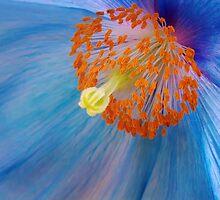 True Blue by Margaret Barry