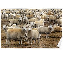 All We like Sheep Poster