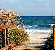 Beach Entrance by Kathy Baccari