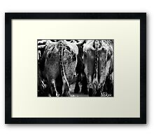 Farm Animal_ cow's behind. Framed Print