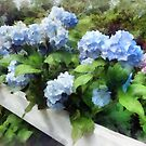 Blue Hydrangea on White Fence by Susan Savad