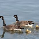 The Honker Family by Gary  Lanners