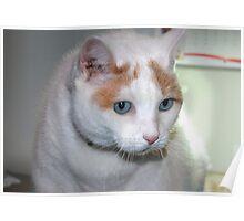 My Cat Finnegan Poster
