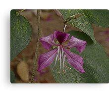 Una bella flor.................. Canvas Print
