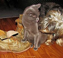 Bella's Boots by nikspix