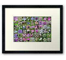 Argyll Wild Flowers: Mauve & Pink Framed Print