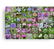 Argyll Wild Flowers: Mauve & Pink Canvas Print