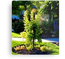 Delicately Wrapped Metal Print