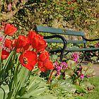 Red tulips in Botanical Gardens by Jose Vazquez