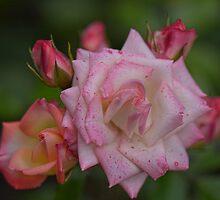 Loving Buds by Linda Cutche