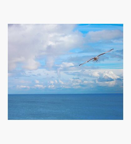Seagull, above the sea Photographic Print