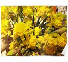 ...it's almost Spring! daffodils..2000 VISUALIZZAZ. GIUGNO  2013-VETRINA RB EXPLORE 17 MARZO 2012 ---- Poster