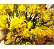 ...it's almost Spring! daffodils..2000 VISUALIZZAZ. GIUGNO  2013-VETRINA RB EXPLORE 17 MARZO 2012 ---- Photographic Print