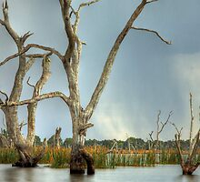 Tendrels - Lake Fyans The Grampians by Graeme Buckland