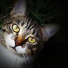 Soulful Eyes by CopperCat