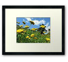 Yellow Flowers on a Grassy Hillside under Fluffy White Clouds & Blue Skies in Canada Framed Print