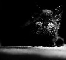 Shadow Kitten by CopperCat