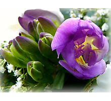 Freesia Buds Photographic Print