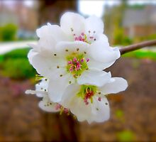 First Blooms By Jonathan Green by Jonathan  Green