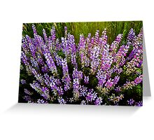 Purple Beauty Greeting Card